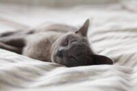 輸入ビジネスにも使える簡単に睡眠の質をアップする方法。